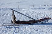 picture of sled-dog  - sleds for a ride on a dog sled in winter - JPG