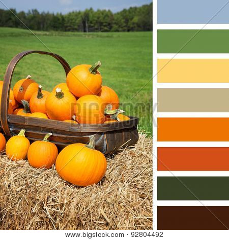 Pumpkins for sale, displayed in a trug on hay bales, In a colour palette with complimentary colour swatches.