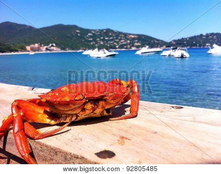 Red crab on the wooden board on the sea background