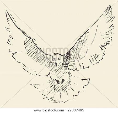 Vintage Illustration White Pigeon Peace Engraved