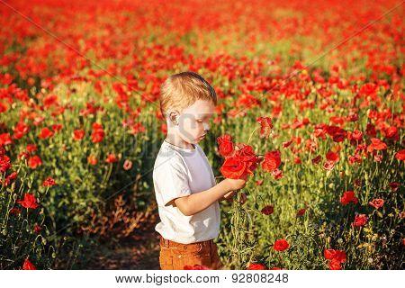 Cute Little Boy With Poppy Flower On Poppy Field On Summer Evening