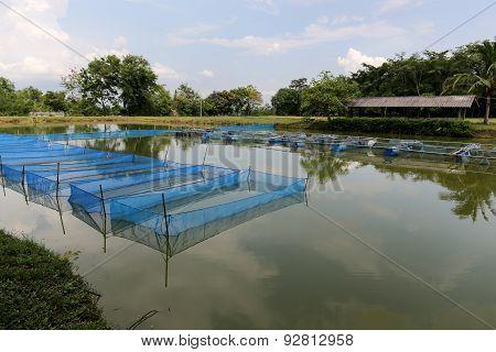 Pond Cage Culture