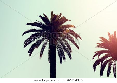 Perfect Palm Trees in Sunlight