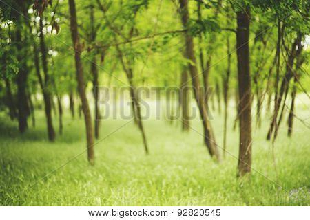 green blurred landscape,