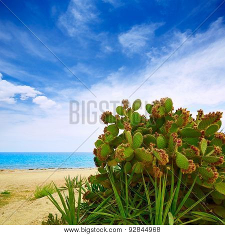 Almeria Mojacar beach prickly pear plant in Mediterranean sea Spain