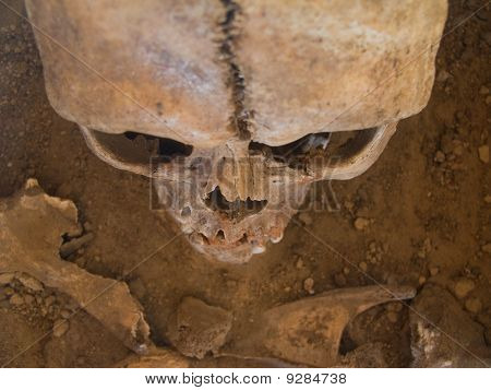 Human skull seen from above