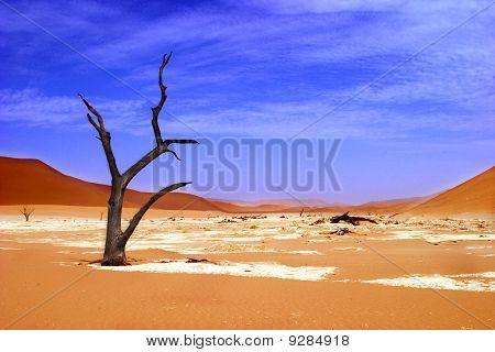 Dead Vlei, Sossusvlei Park Namibia