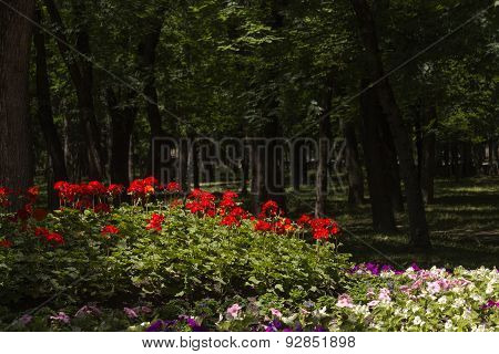 Flowerbed In The Park Of Essentuki.