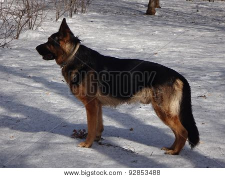 Dog in winter day