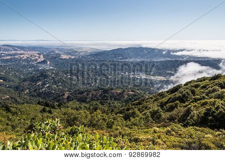 Marin County Landscape