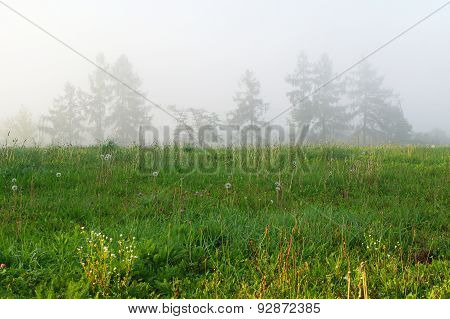 Foggy Morning On Wilderness