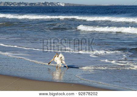 Ocean Park Beach Near Punta Del Este, Atlantic Coast, Uruguay