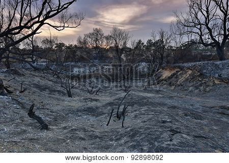 Land With Trees After Fire