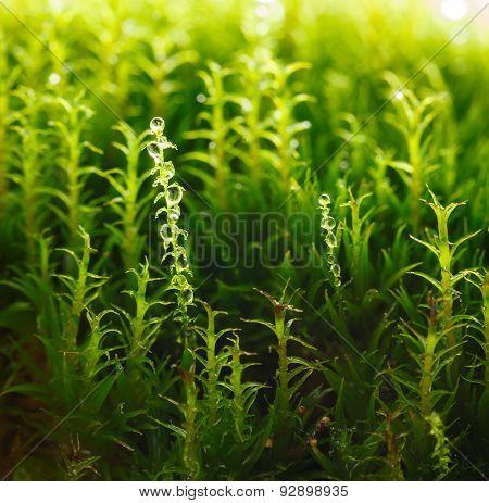 Growing Moss