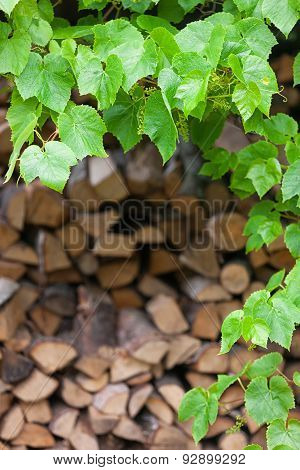 Green Leaves Of Wild Plants On The Background Of Wood Logs