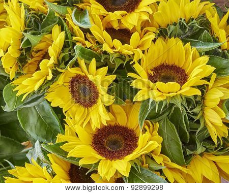 colorful sunflowers close up