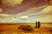 picture of windy  - Yellow flat desert with shallow lakes - JPG