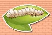 picture of worm  - Sticker of a worm on a green leaf - JPG