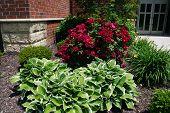 stock photo of lillies  - A flower garden that includes hosta - JPG