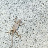 stock photo of cinder block  - Eastern fence lizard well camouflaged on cinder block - JPG
