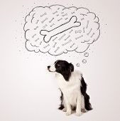 pic of collie  - Cute black and white border collie sitting and dreaming about a bone in a thought bubble - JPG