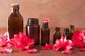 picture of azalea  - essential oil azalea flowers on dark rustic background  - JPG