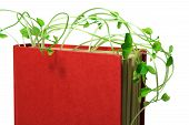 pic of snow peas  - Close Up of Book and Snow Pea Sprouts - JPG