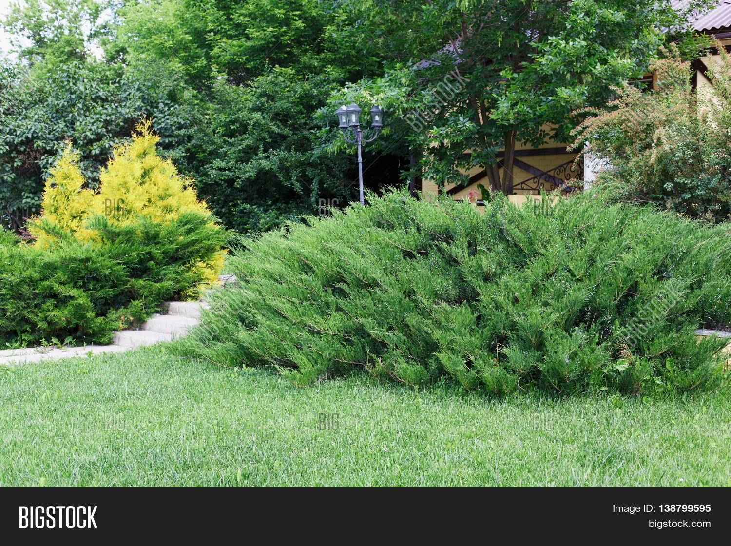 Green bushes for landscaping 49839 notefolio for Large bushes for landscaping