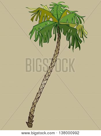 cartoon bent coconut tree, palm green without coconuts