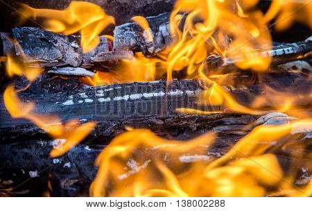 birch wood burns with a bright flame