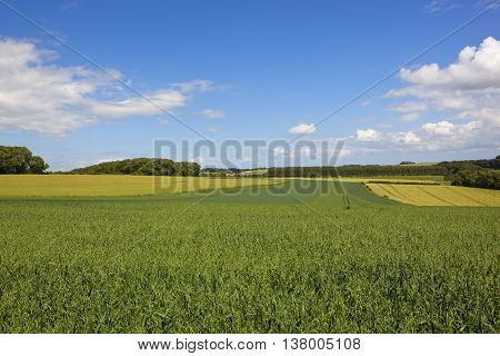 Sweeping Oat Fields