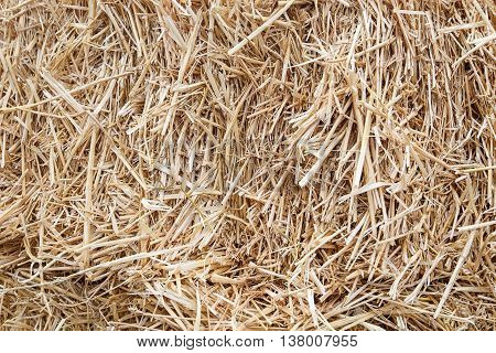 hay straw background dry texture close up