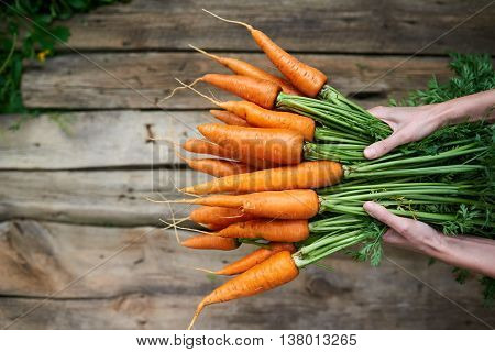 Top view of female hands holding fresh carrots with green leaves over rustic weathered wooden background with copy space