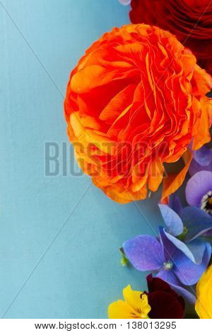 Fresh cut Flowers Background on Blue wood - ranunculus, pansies, roses