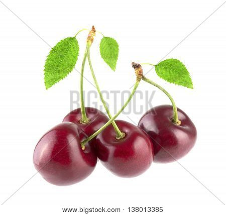 Four sweet cherry isolated on white background
