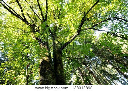 An upward view of the forest canopy in the sun