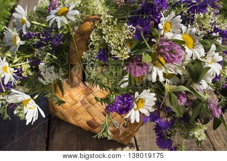 basket with wild flowers, chamomile, clover and weasel