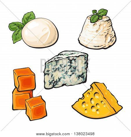 Set of different cheeses mozarella, cheddar, Roquefort, camembert and maasdam isolated sketch style vector illustration on white background. Various sorts of delicious hard and soft cheese