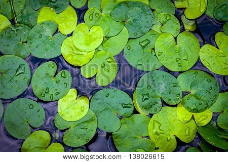 green water plant leaves in water - abstract natural background