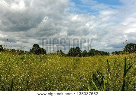 Beautiful summer landscape with wet meadow overgrown with dense tall vegetation under blue sky with clouds in summertime Poland. Horizontal view.