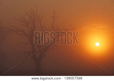 Colorful sunset in africa in savanna, bright colorful summer sky