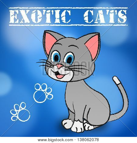 Exotic Cats Indicates Unique Puss And Feline
