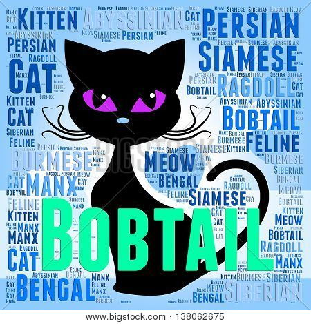 Bobtail Cat Represents Puss Mating And Reproducing