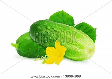 Two fresh green ripe cucumber with leaves and flower isolated on white background. Design element for product label, catalog print, web use.