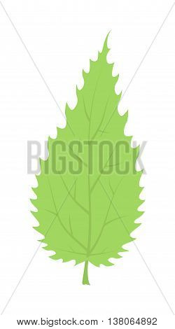 Green leave eco design elements Leaf icon vector illustration friendly nature elegance symbol. Decoration flora leaf icon. Natural element ecology symbol green organic tree.