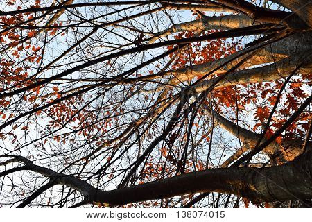 Autumn Tree With Dead Branches And Leaves