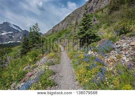 Wildflowers flank open mountain trail in high elevation