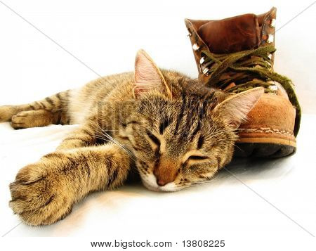 Brown cat and brown boot