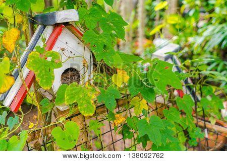 Forest Bird House