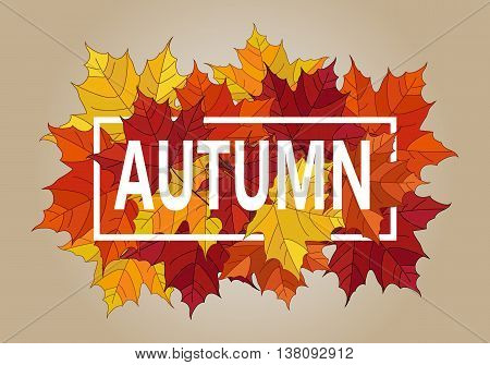Autumn vector banner. Pile of leaves. Maple autumn  leaves. Autumn typographic.Vector Fall leaf.